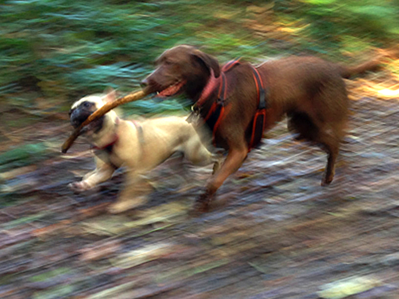 Wonderful Animals Concierge  Jersey Dog Walking  Servicesrates With Foxy Gizomwillowstickplayjerseydogwalks With Agreeable Grey Gardens Hbo Full Movie Also Paypoint Welwyn Garden City In Addition Unusual Gifts For Gardeners And Sheds Garden As Well As Extension Garden Room Additionally Garden Centre Romford From Animalsconciergecouk With   Foxy Animals Concierge  Jersey Dog Walking  Servicesrates With Agreeable Gizomwillowstickplayjerseydogwalks And Wonderful Grey Gardens Hbo Full Movie Also Paypoint Welwyn Garden City In Addition Unusual Gifts For Gardeners From Animalsconciergecouk